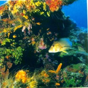 Terumbu karang dan organisme penghuninya